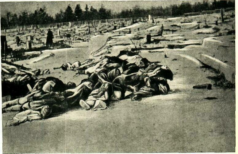 Немецкие крошки раздеваются фото 167-983